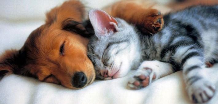 Что такое секс барьер для собак и кошек?