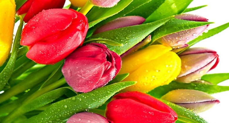 Цветы в Дубне