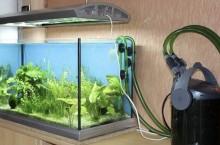 Зачем нужны фильтры для аквариума?