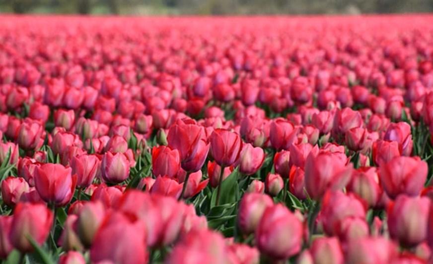 живые цветы в Магнитогорске